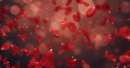 Whirl Flying Romantic Dark Red Rose Flower Petals Background Loop 4k Animation
