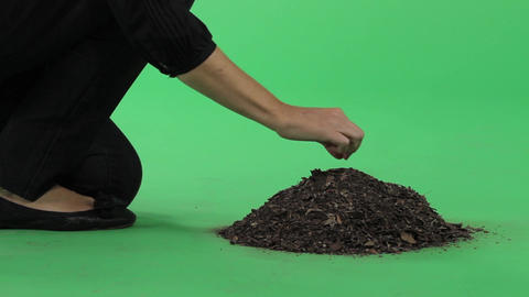 Woman placing seed chroma key Footage