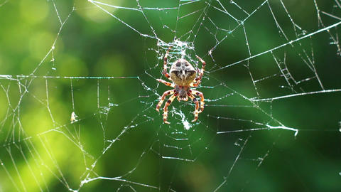 Big spider on a spiderweb Stock Video Footage