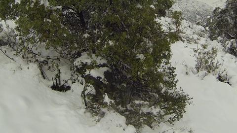 Snowy hill pine tree Footage