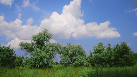 Landscape of a green meadow with green trees Filmmaterial