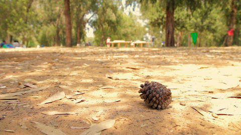 One dry brown pine cone lying on the ground among many dry leaves in the forest Live Action