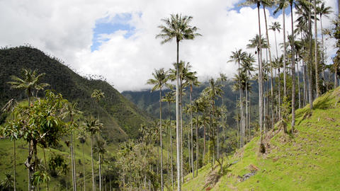 Beautiful Cocora Valley Footage