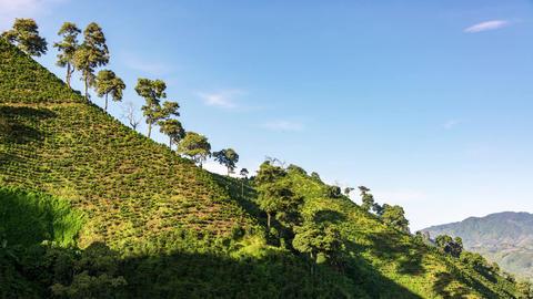 Coffee Landscape Time Lapse ビデオ