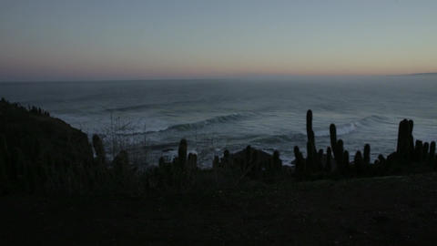 Cacti and waves Live Action