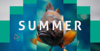 Summer Dynamic Opener Plantilla de After Effects