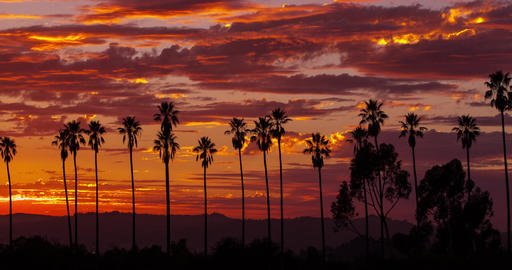 Colorful Sunset Clouds Behind Palm Trees Image