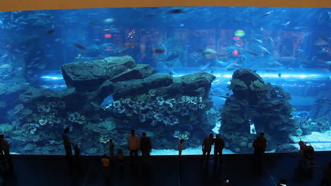 Huge glass wall, large aquarium with exotic fish. People... Stock Video Footage
