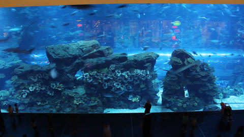 Huge glass wall, large aquarium with exotic fish. People walk and look to Footage