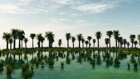 Palm trees at laguna island. sunny day Animation