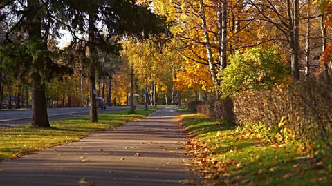 Autumn landscape with road Footage