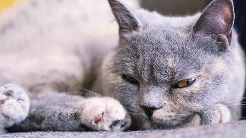 sleepy cat Footage