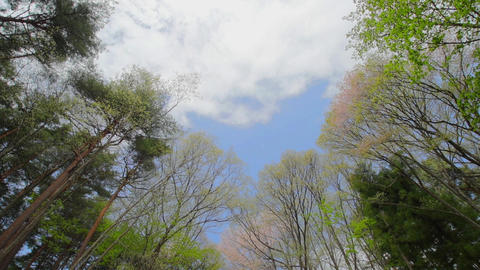 Blue sky and trees in spring, Japan Footage