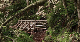 Snowing on a manmade timber bridge in a tranquil forest Filmmaterial