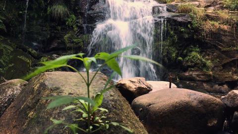Natural vegetation in Cabreia Portugal Footage