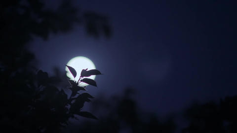 Moonlight through the moving leaves Live Action