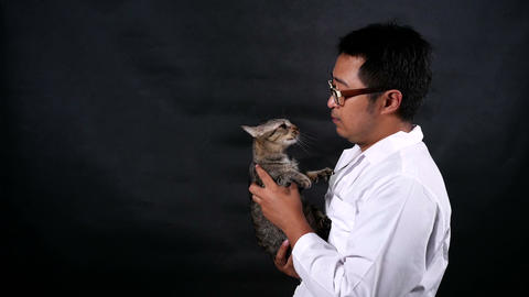 veterinarian carry and playing a cat with care Live-Action