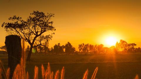 Sunset over rice field フォト