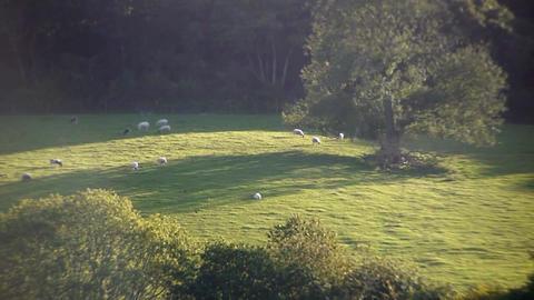 Sheep [Timelapse] Filmmaterial