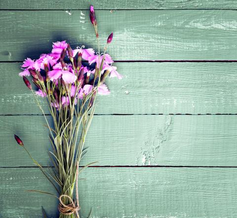 Bouquet of purple field carnations フォト