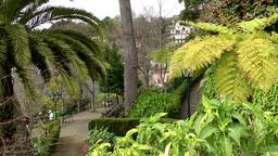 Portugal Madeira view into botanic garden of Monte village ビデオ