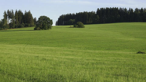 Meadow and forests. Rural summer landscape with green meadow and forest Live Action