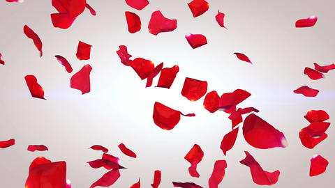 Petals of red roses falling down in an arty way Animation