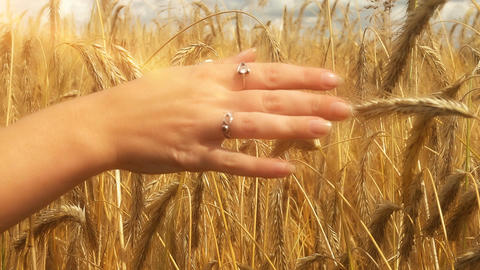 Close-up of of Woman's hand running through golden wheat field. Girl's hand touc Archivo