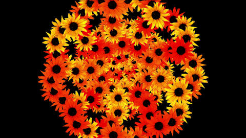 4k Sunflower wreath wedding background,flower plant bloom pattern,life vitality Footage