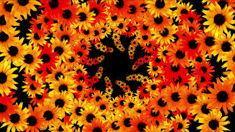 4k Sunflower wreath wedding background,flower plant bloom pattern,life vitality Live Action