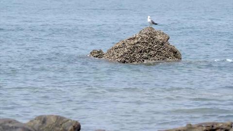 seagull, sky, sea Footage
