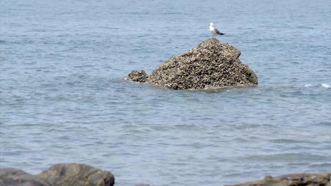 seagull, sky, sea Archivo