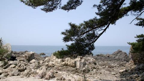 pine tree, rocks, sea Footage