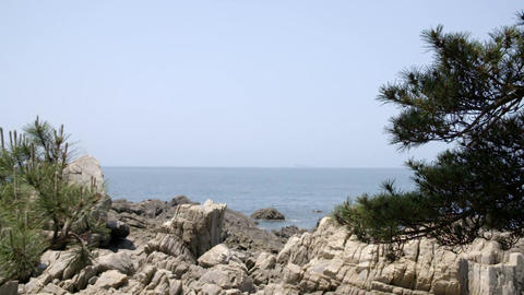 pine tree, rocks, sea Filmmaterial