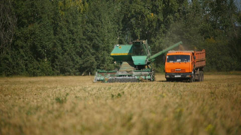 Focus Changes and Shows Combine Loading Harvest into Tipper Footage