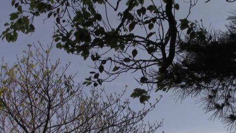 Sky1 ビデオ
