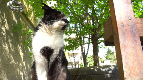 Low angle view of cat outdoors Stock Video Footage