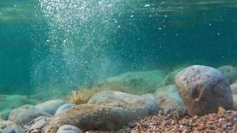 rocks and seaweeds seen from underwater, adriatic sea Footage