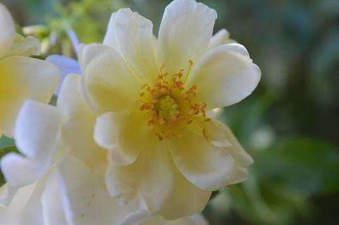 White flower フォト