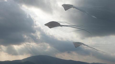 Sky Stingrays Travel 画像