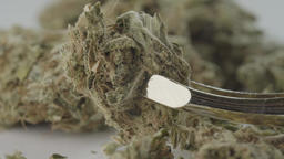 Cannabis. Marijuana. A close-up of cannabis. Macro Footage