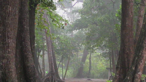 Heavy rain in the rainforest Footage