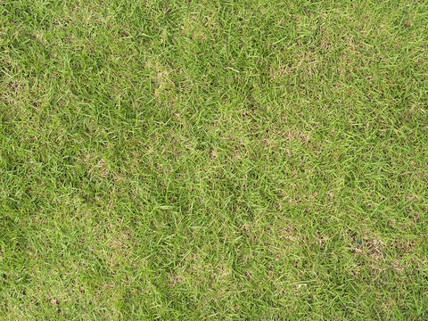 Green lawn grass background Photo
