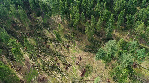 Storm damage, forest Footage