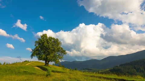 Mountainous Landscape with a Lonely Tree and Walking Cows Filmmaterial