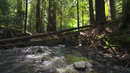 Moving-upstream-along-creek-in-redwood-forest WypG77zXB Footage