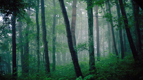 Foggy forest Footage