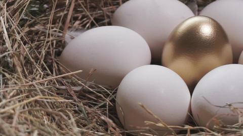 Golden egg nest. Golden egg and white eggs Live Action