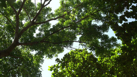 Tree swaying in the wind at forest Footage