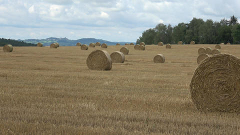 Wheat field after harvest with straw bales. Row of straw bales on the field Live Action